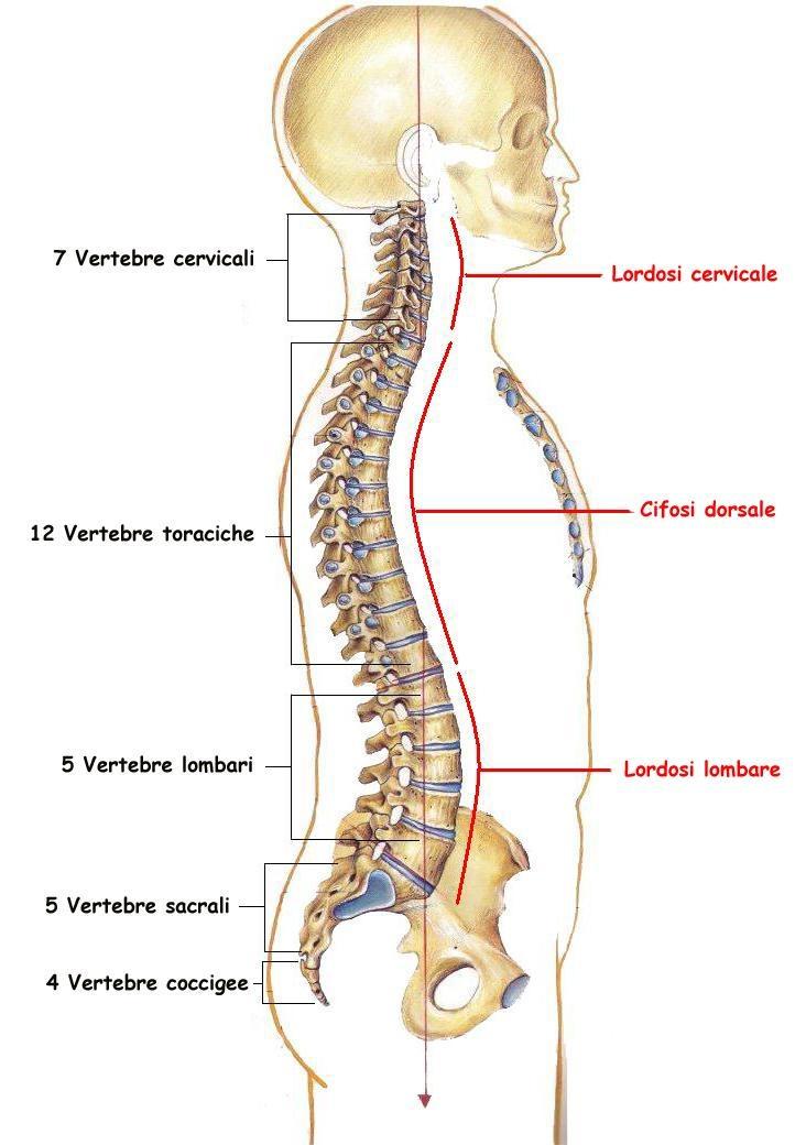 Cultura fisica per osteochondrosis di reparto lombare