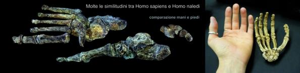 homo_naledi_nuovo_ominide (1)