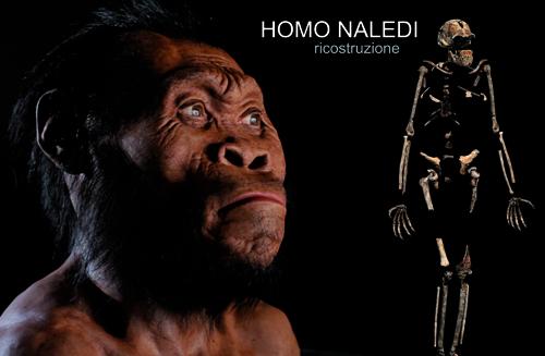 homo_naledi_nuovo_ominide (3)