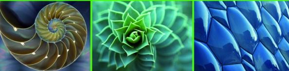 architettura_biomimetica (3)